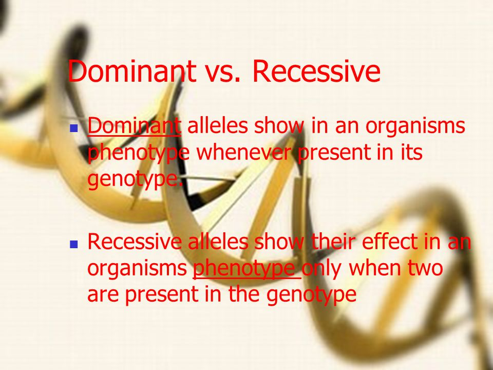 Dominant vs. Recessive Dominant alleles show in an organisms phenotype whenever present in its genotype.