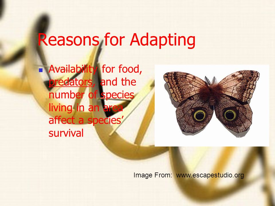 Reasons for Adapting Availability for food, predators, and the number of species living in an area affect a species' survival.
