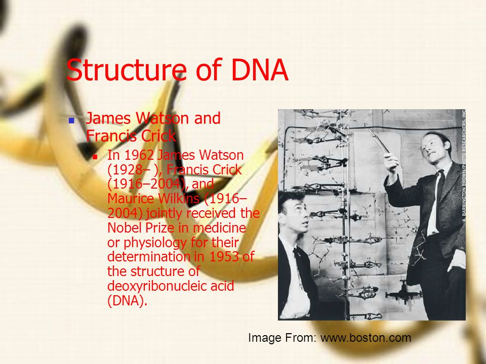 Structure of DNA James Watson and Francis Crick