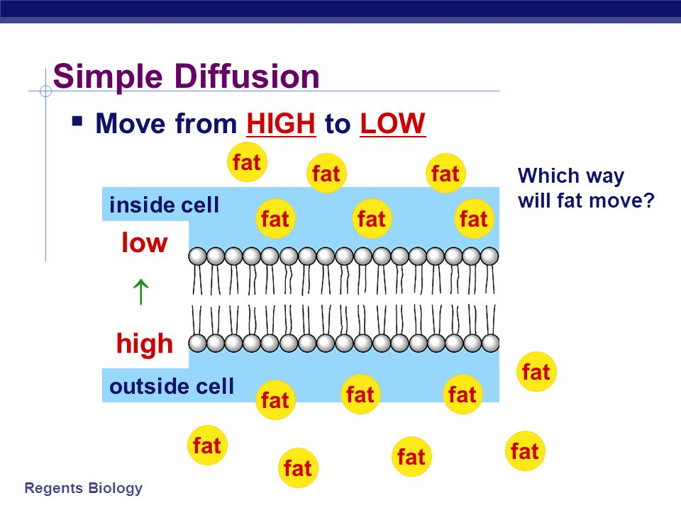 Simple Diffusion Move from HIGH to LOW low  high fat fat fat