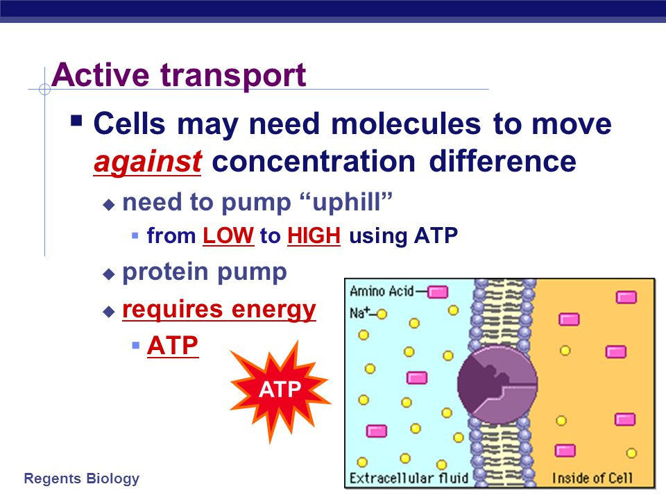 Active transport Cells may need molecules to move against concentration difference. need to pump uphill