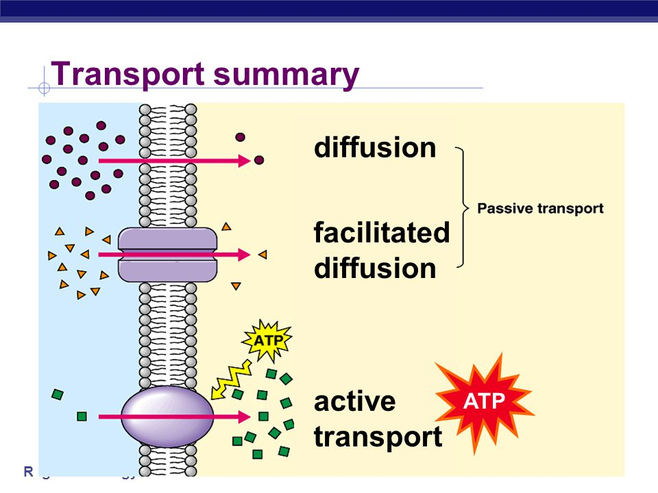 Transport summary diffusion facilitated diffusion ATP active transport