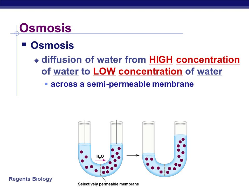 Osmosis Osmosis. diffusion of water from HIGH concentration of water to LOW concentration of water.