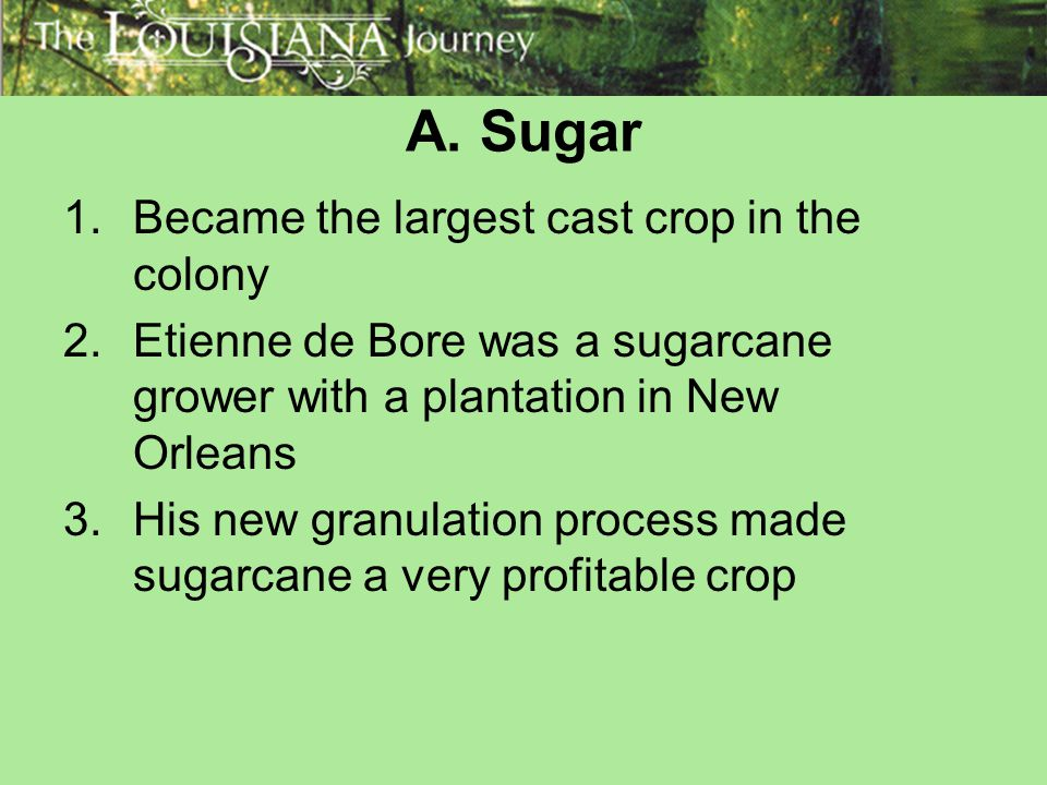 A. Sugar Became the largest cast crop in the colony