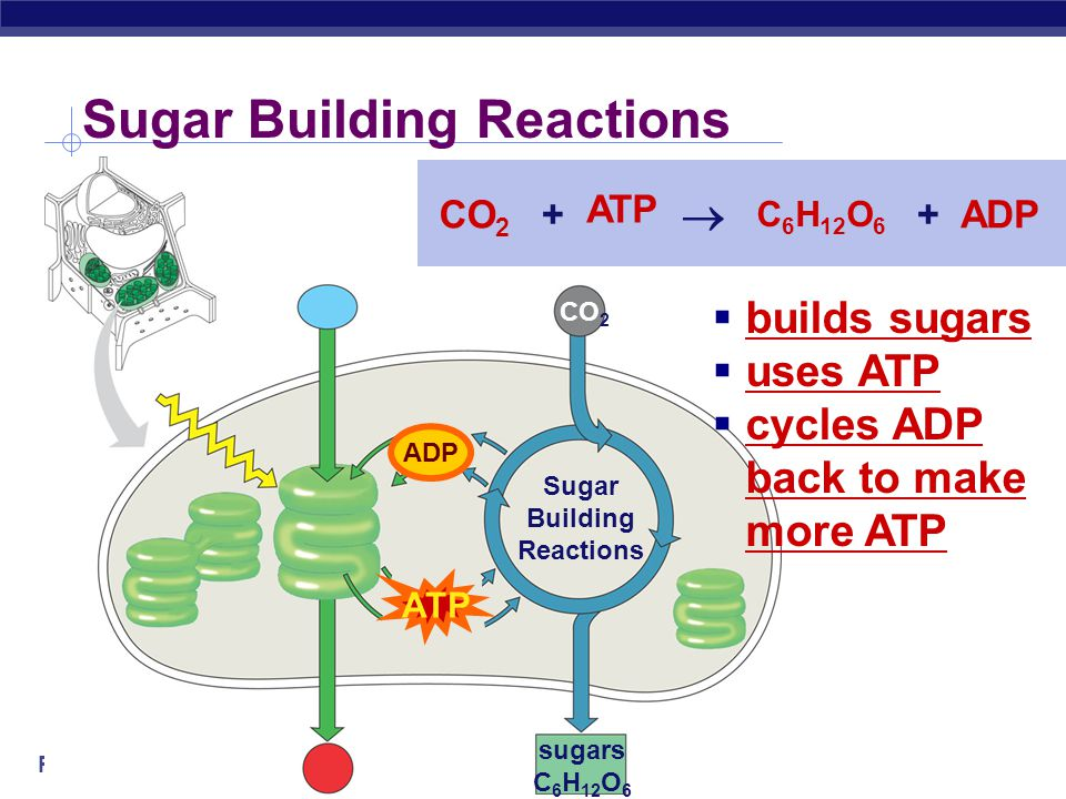 Sugar Building Reactions