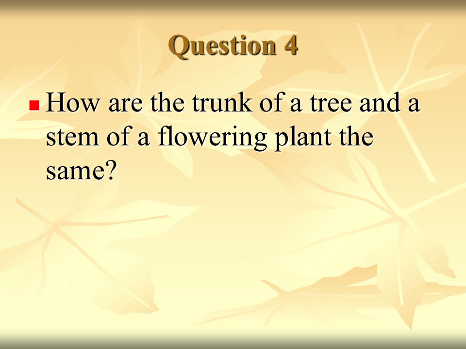 Question 4 How are the trunk of a tree and a stem of a flowering plant the same