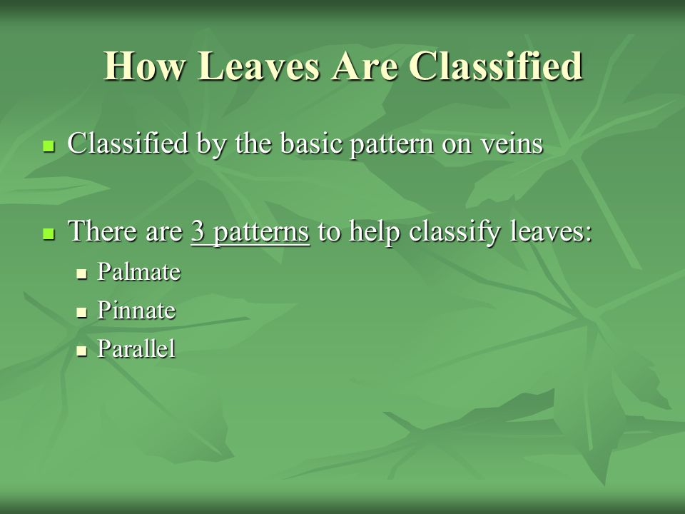 How Leaves Are Classified