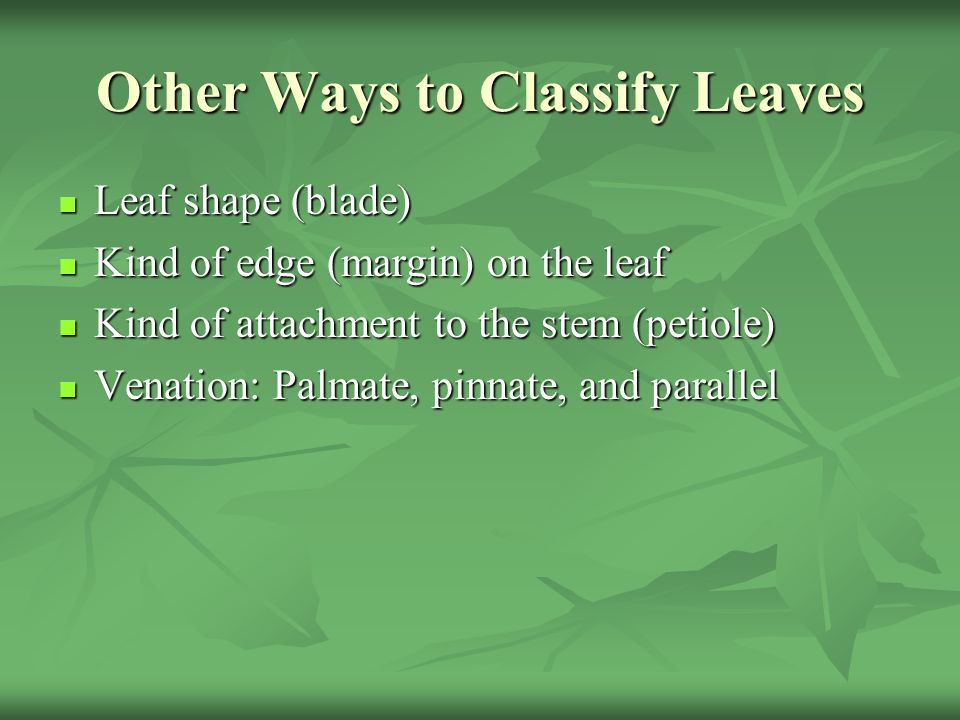 Other Ways to Classify Leaves
