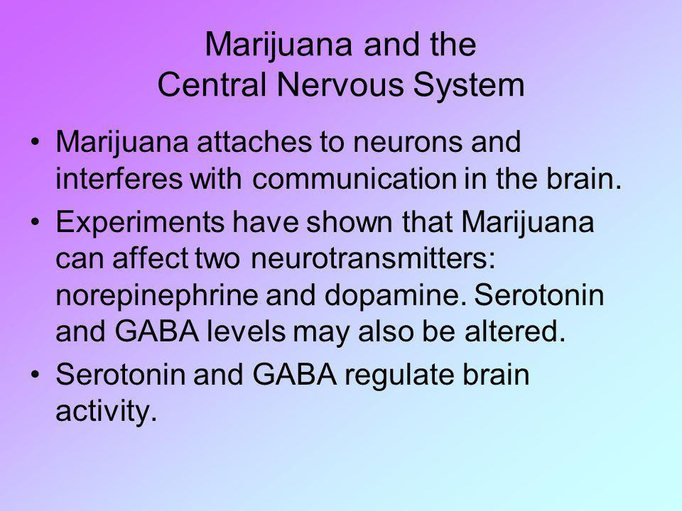 Marijuana and the Central Nervous System