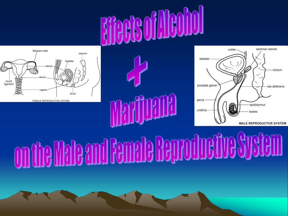on the Male and Female Reproductive System