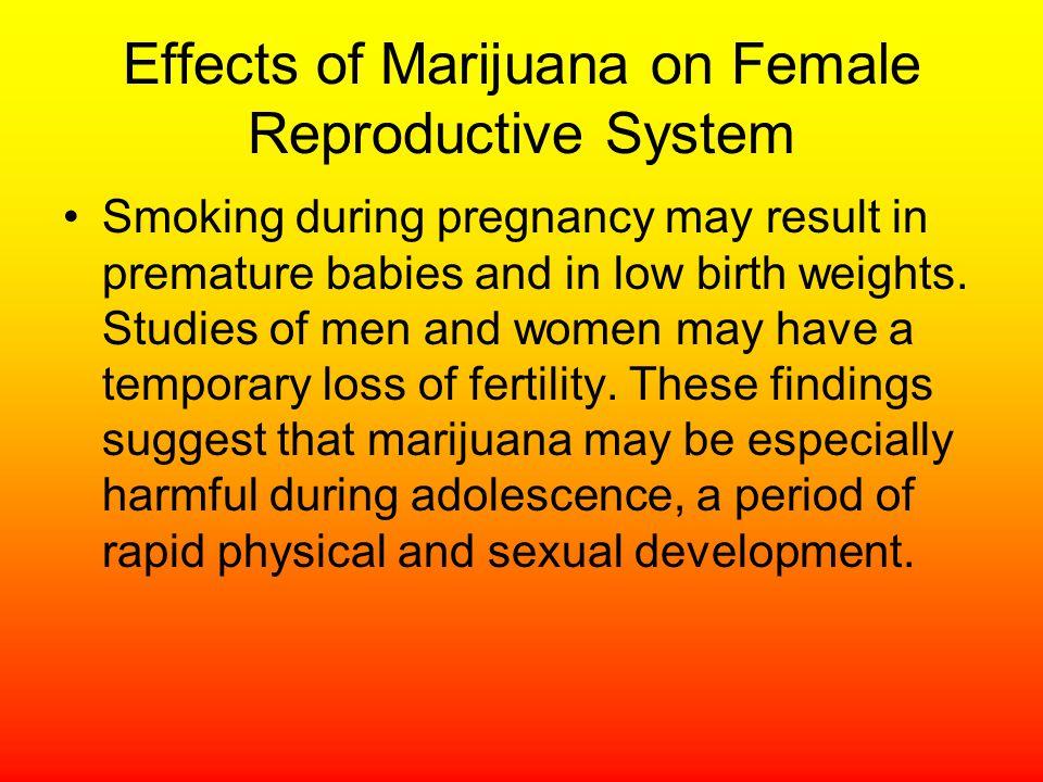 Effects of Marijuana on Female Reproductive System