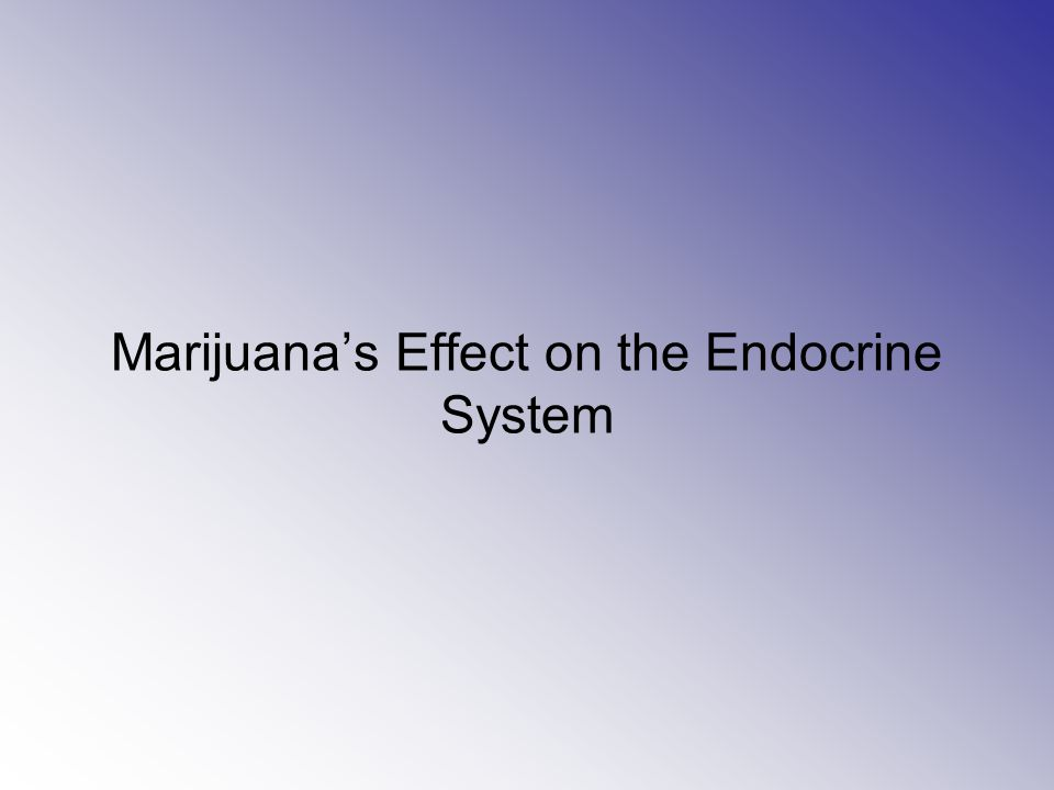 Marijuana's Effect on the Endocrine System