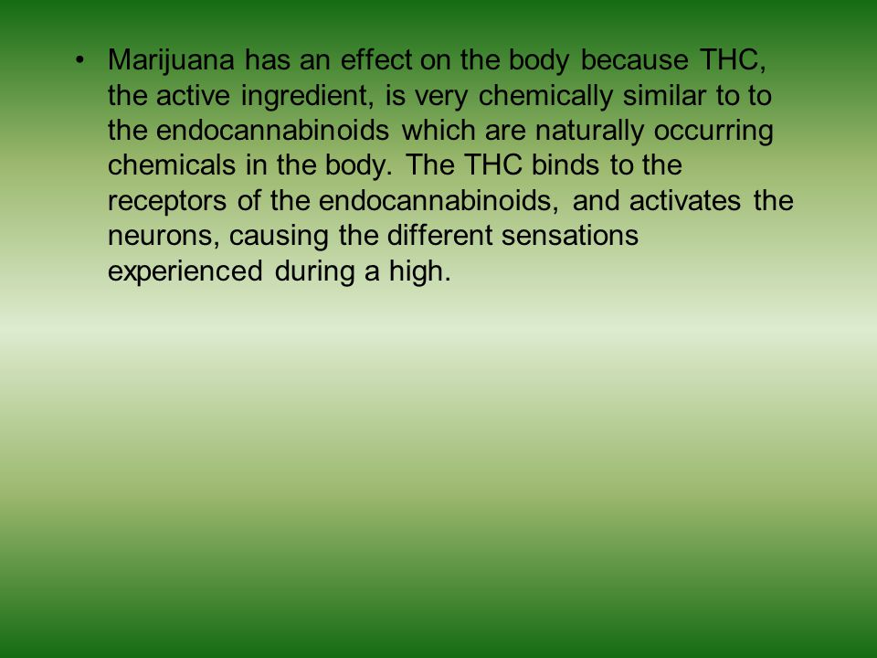 Marijuana has an effect on the body because THC, the active ingredient, is very chemically similar to to the endocannabinoids which are naturally occurring chemicals in the body.