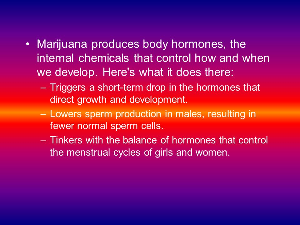Marijuana produces body hormones, the internal chemicals that control how and when we develop. Here s what it does there: