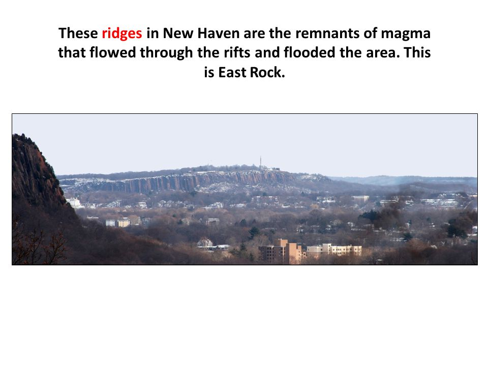 These ridges in New Haven are the remnants of magma that flowed through the rifts and flooded the area.