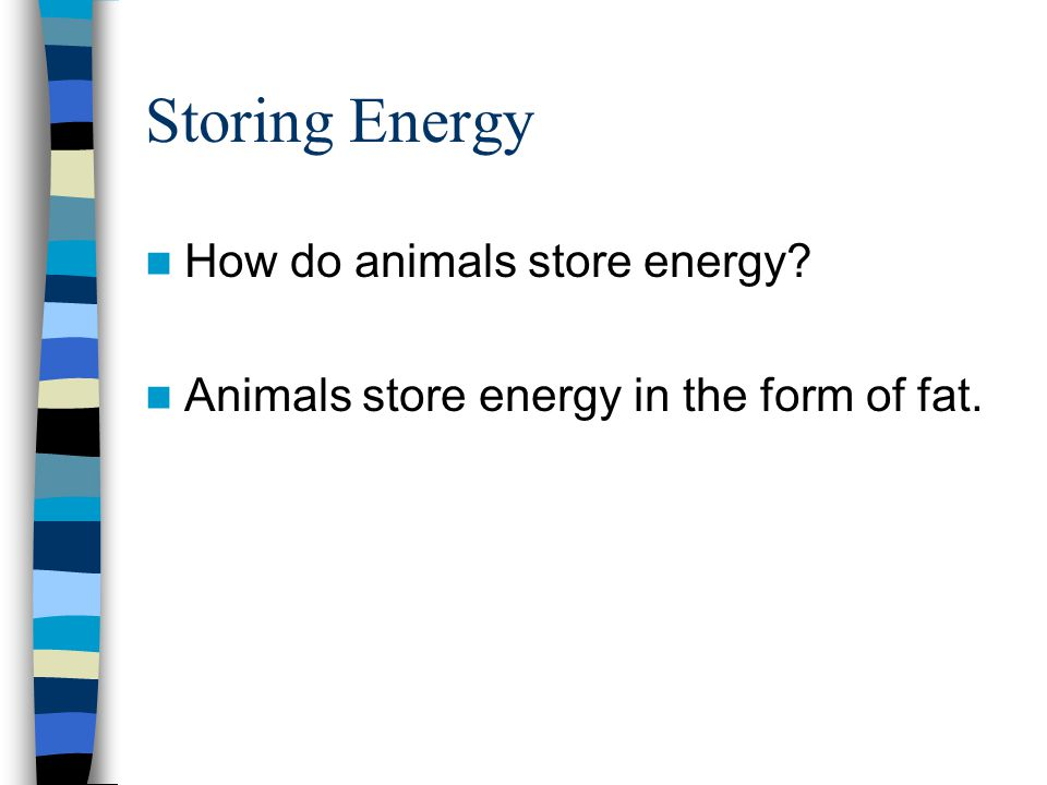 Storing Energy How do animals store energy