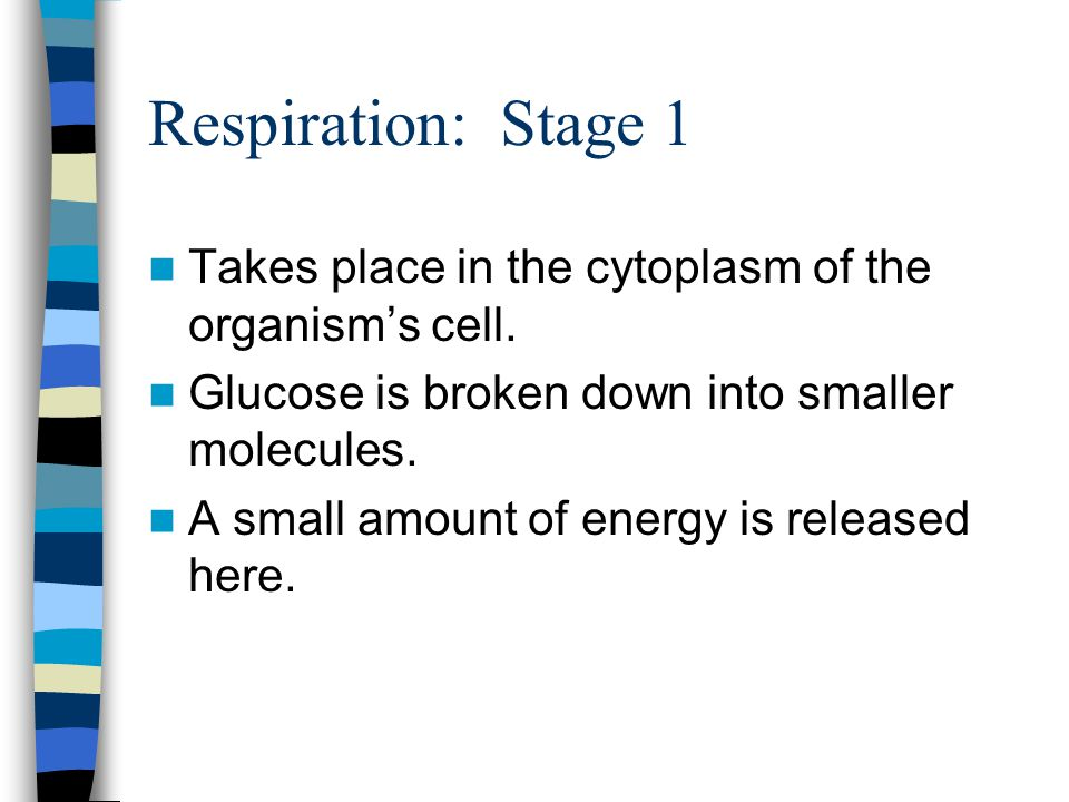 Respiration: Stage 1 Takes place in the cytoplasm of the organism's cell. Glucose is broken down into smaller molecules.