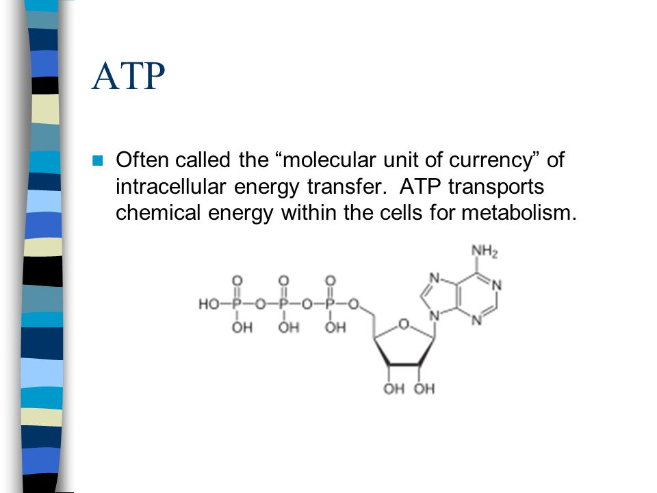 ATP Often called the molecular unit of currency of intracellular energy transfer.