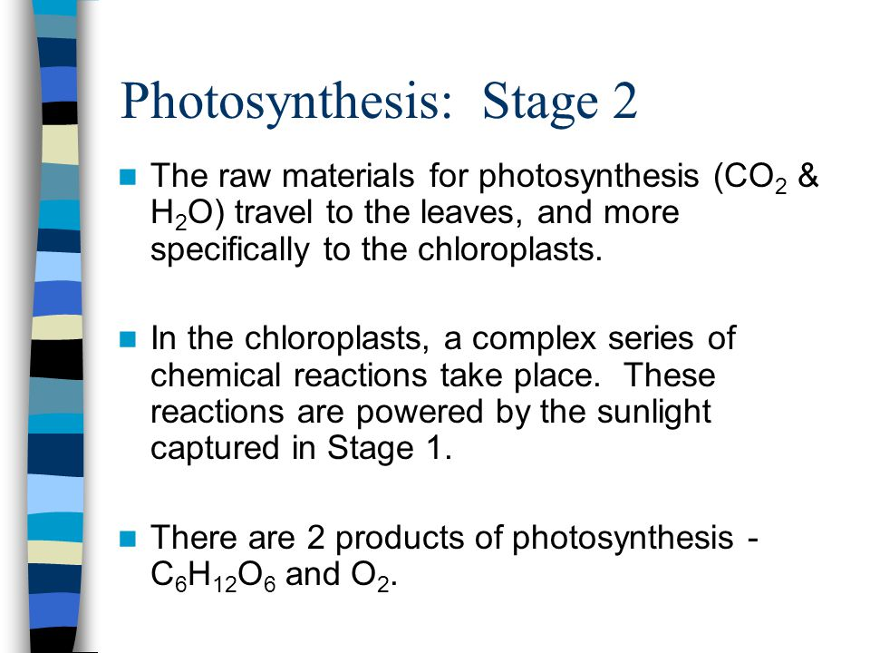 Photosynthesis: Stage 2