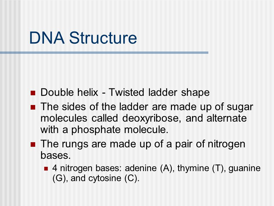 DNA Structure Double helix - Twisted ladder shape