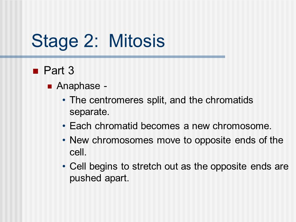 Stage 2: Mitosis Part 3 Anaphase -