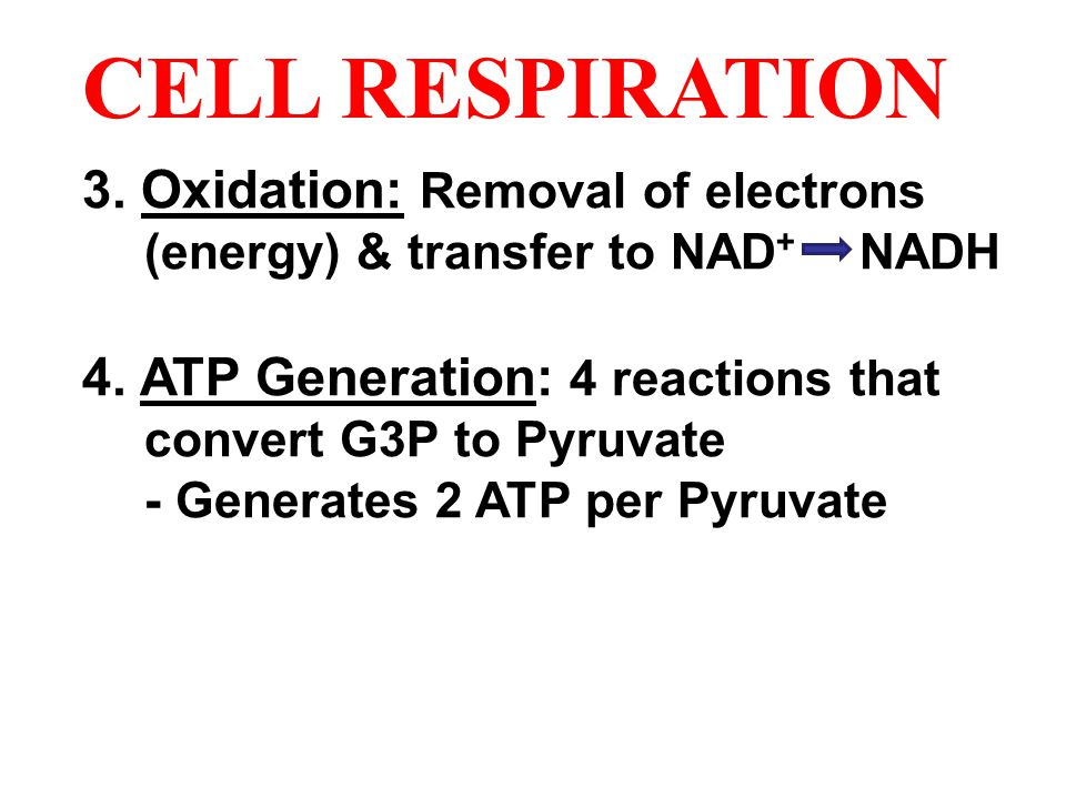 CELL RESPIRATION 3. Oxidation: Removal of electrons