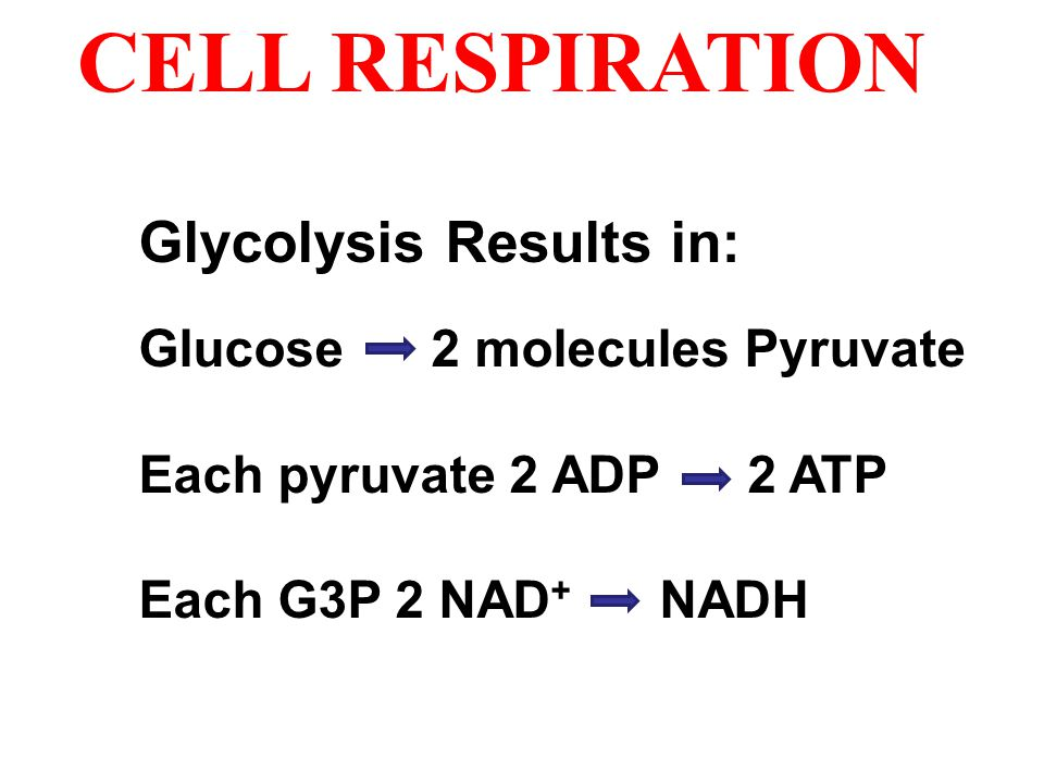 CELL RESPIRATION Glycolysis Results in: Glucose 2 molecules Pyruvate