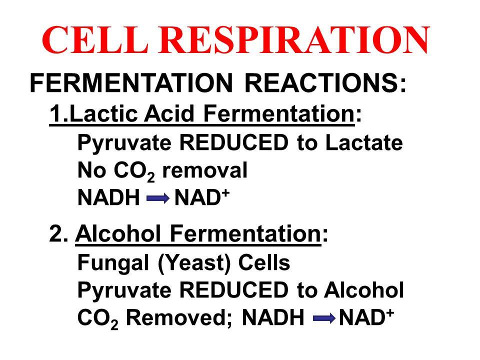 CELL RESPIRATION FERMENTATION REACTIONS: 1.Lactic Acid Fermentation: