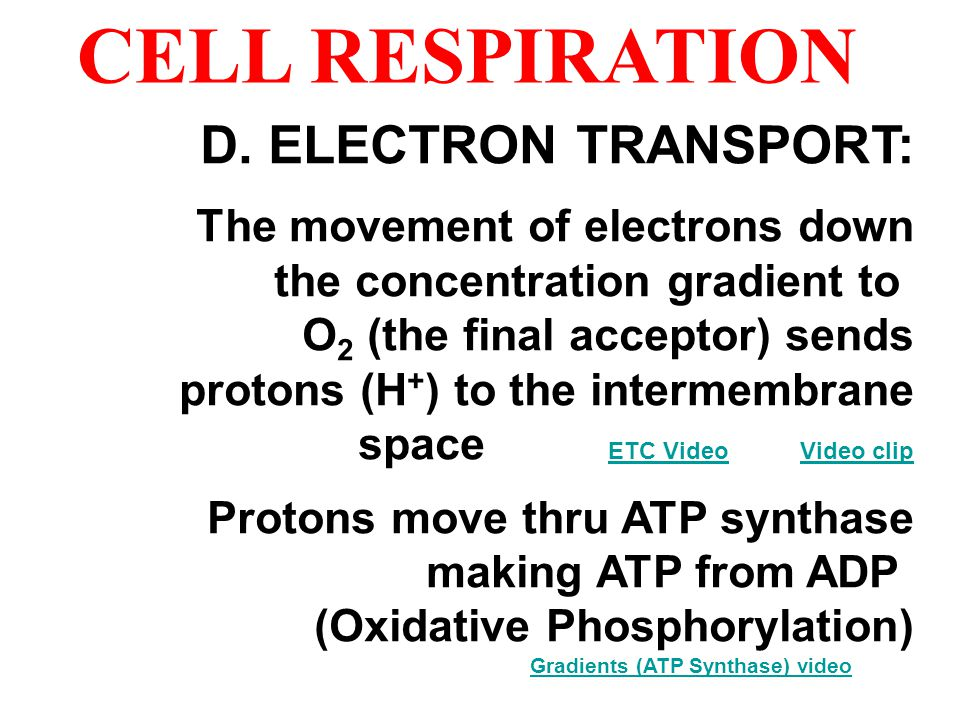 CELL RESPIRATION D. ELECTRON TRANSPORT: The movement of electrons down