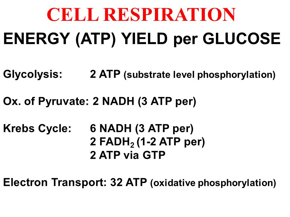 CELL RESPIRATION ENERGY (ATP) YIELD per GLUCOSE