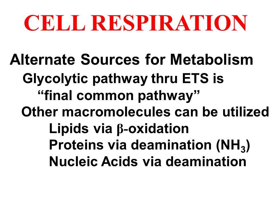CELL RESPIRATION Alternate Sources for Metabolism
