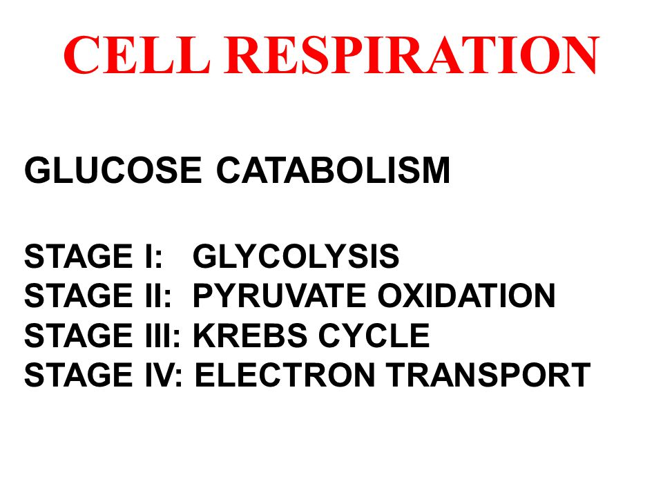 CELL RESPIRATION GLUCOSE CATABOLISM STAGE I: GLYCOLYSIS