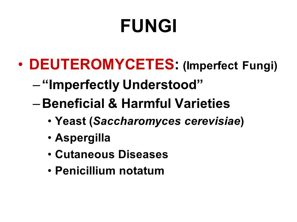 FUNGI DEUTEROMYCETES: (Imperfect Fungi) Imperfectly Understood