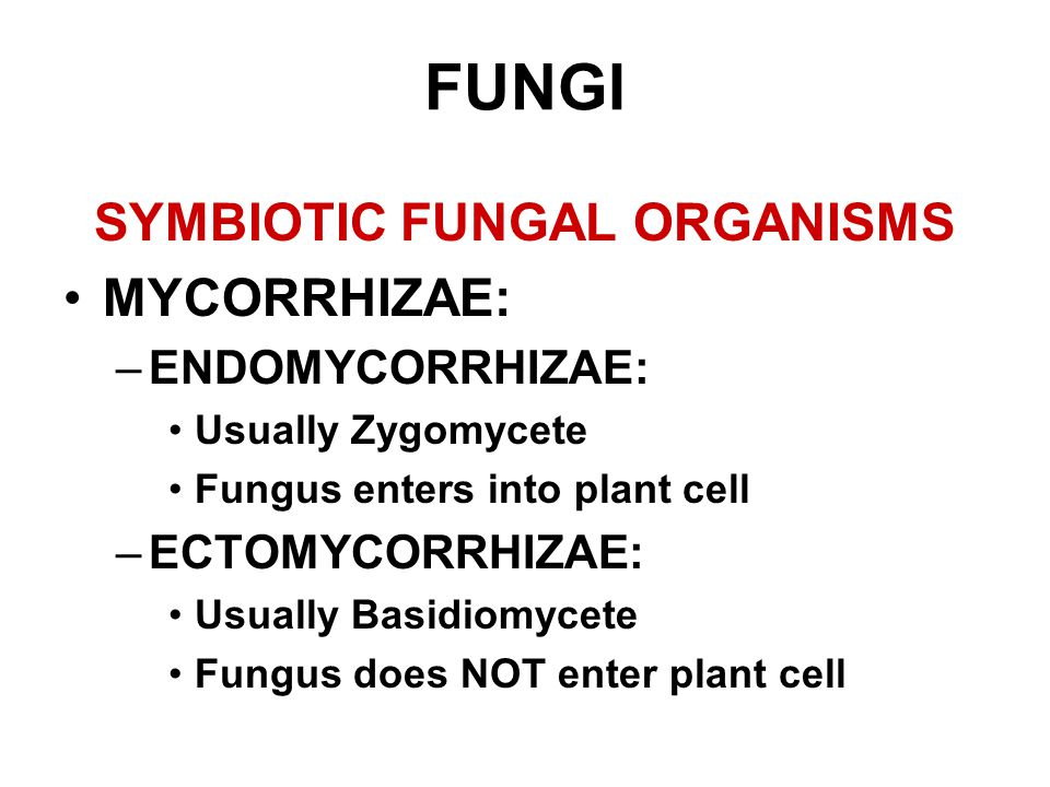 SYMBIOTIC FUNGAL ORGANISMS