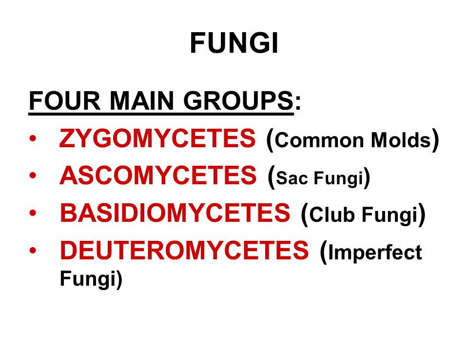 FUNGI FOUR MAIN GROUPS: ZYGOMYCETES (Common Molds)