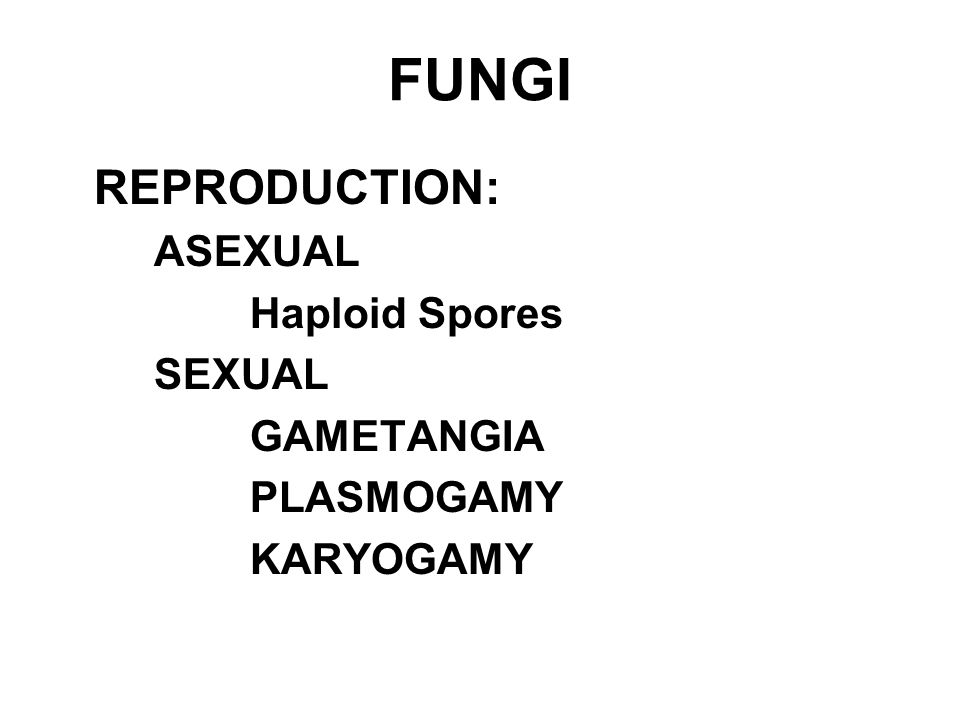 FUNGI REPRODUCTION: ASEXUAL Haploid Spores SEXUAL GAMETANGIA