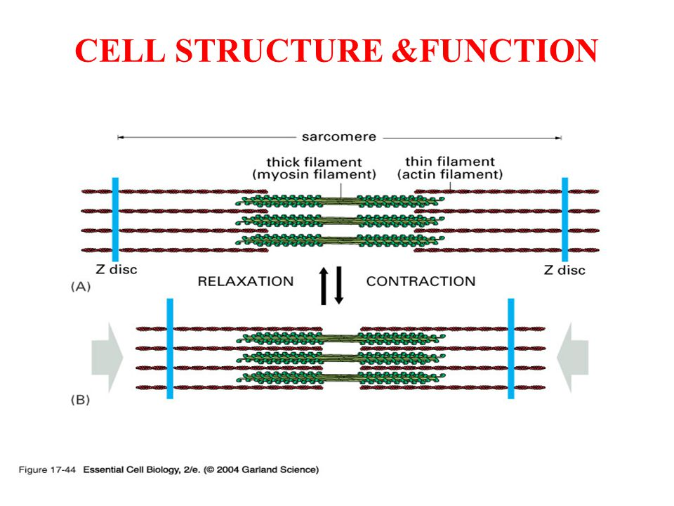 CELL STRUCTURE &FUNCTION
