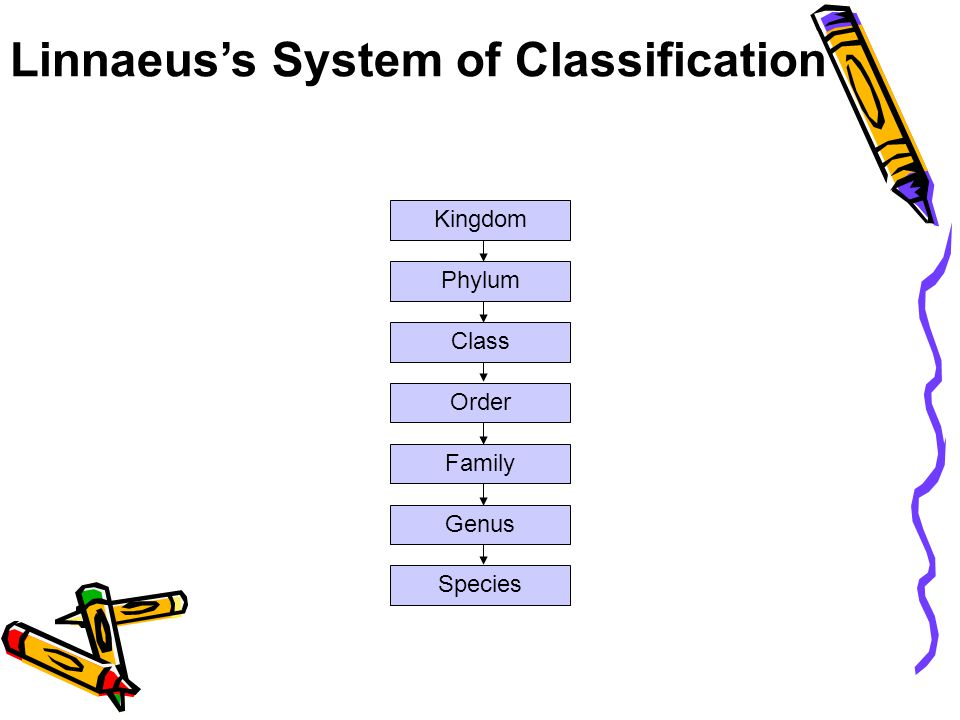 Linnaeus's System of Classification