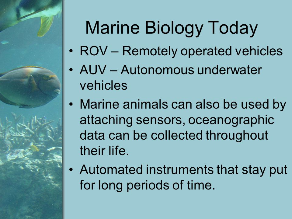 Marine Biology Today ROV – Remotely operated vehicles
