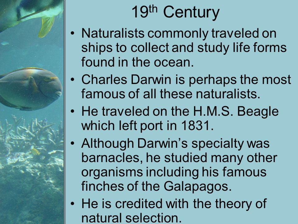 19th Century Naturalists commonly traveled on ships to collect and study life forms found in the ocean.