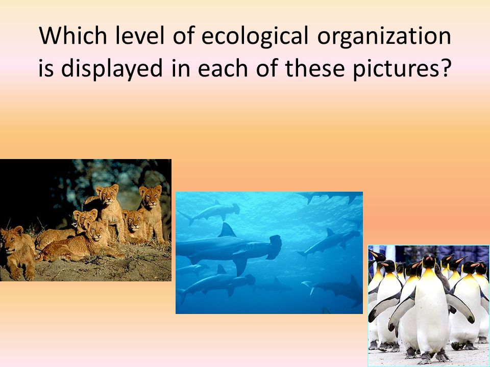 Which level of ecological organization is displayed in each of these pictures