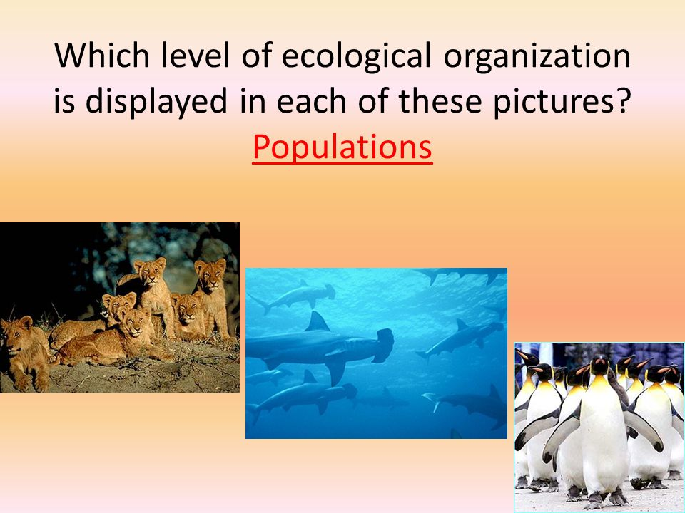 Which level of ecological organization is displayed in each of these pictures Populations