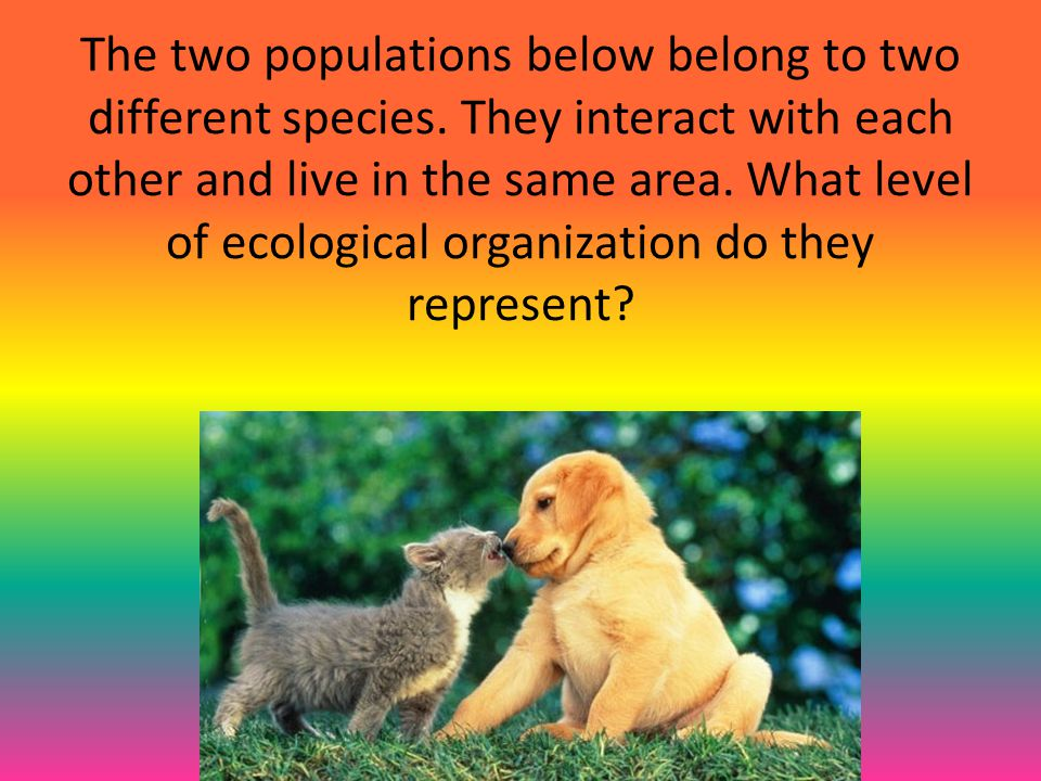 The two populations below belong to two different species