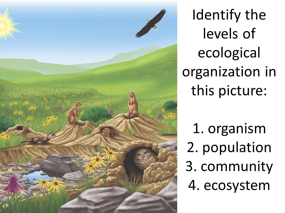Identify the levels of ecological organization in this picture: 1