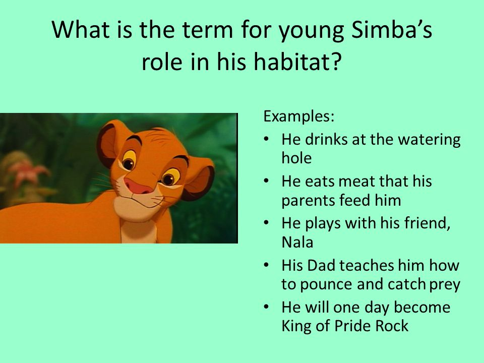 What is the term for young Simba's role in his habitat