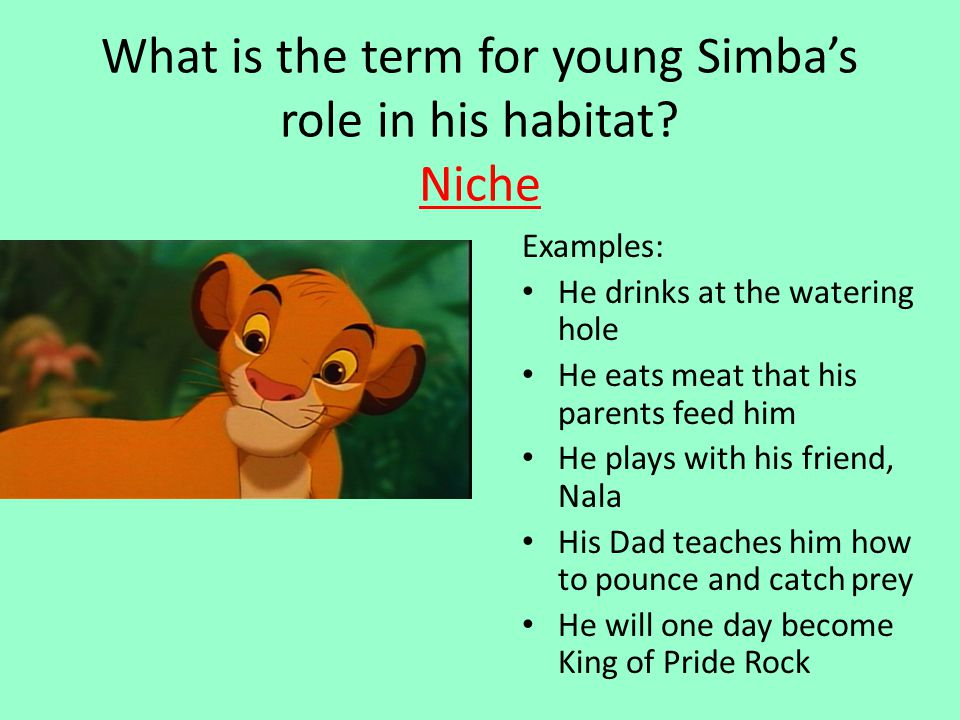 What is the term for young Simba's role in his habitat Niche