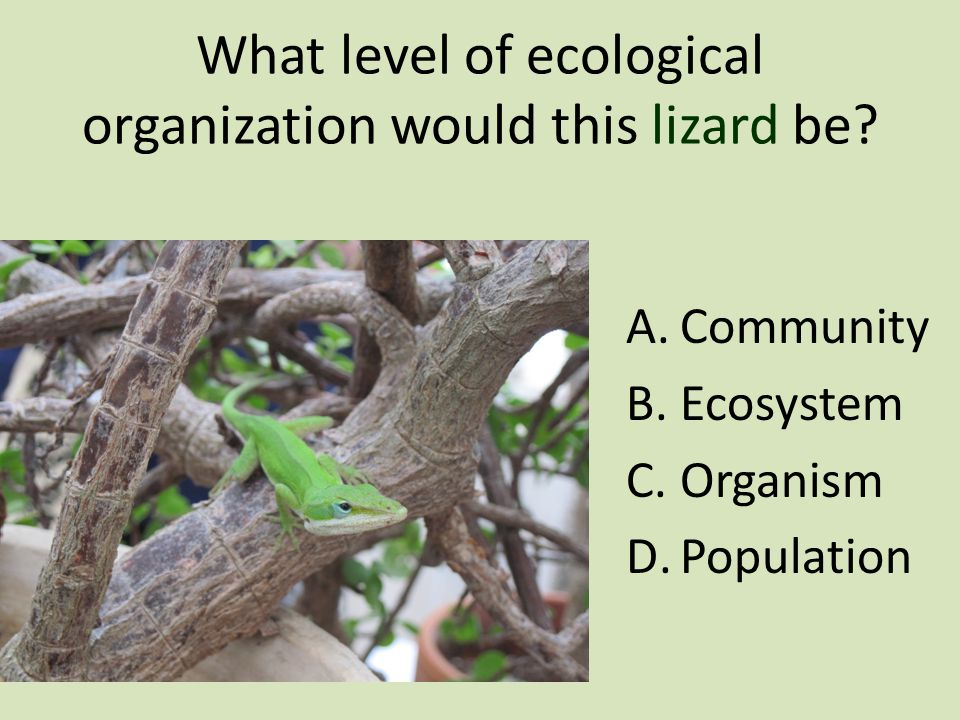 What level of ecological organization would this lizard be