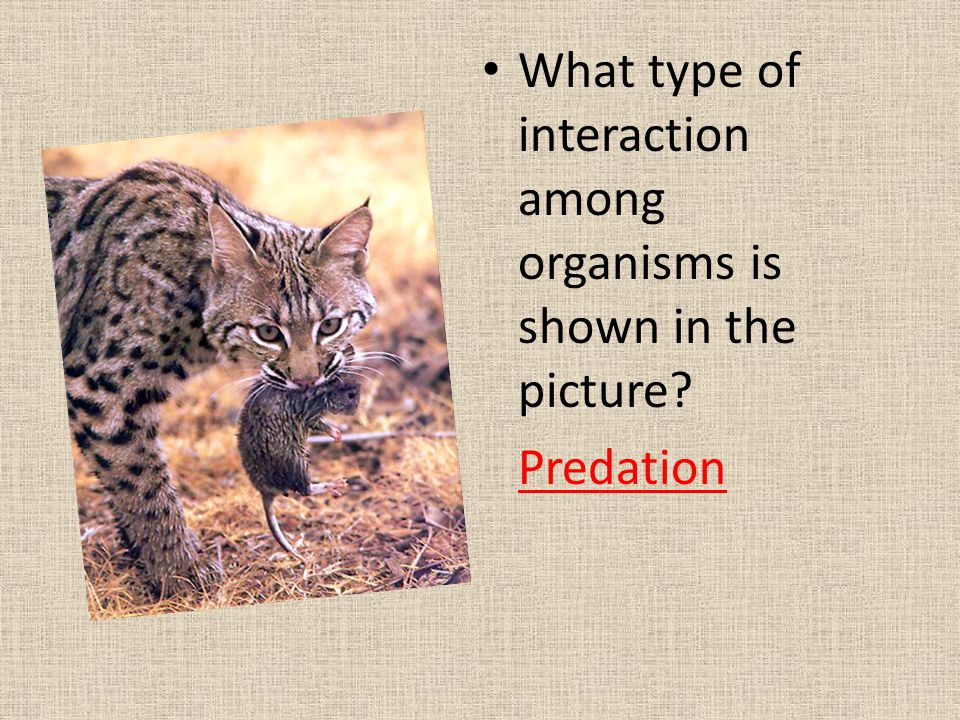 What type of interaction among organisms is shown in the picture