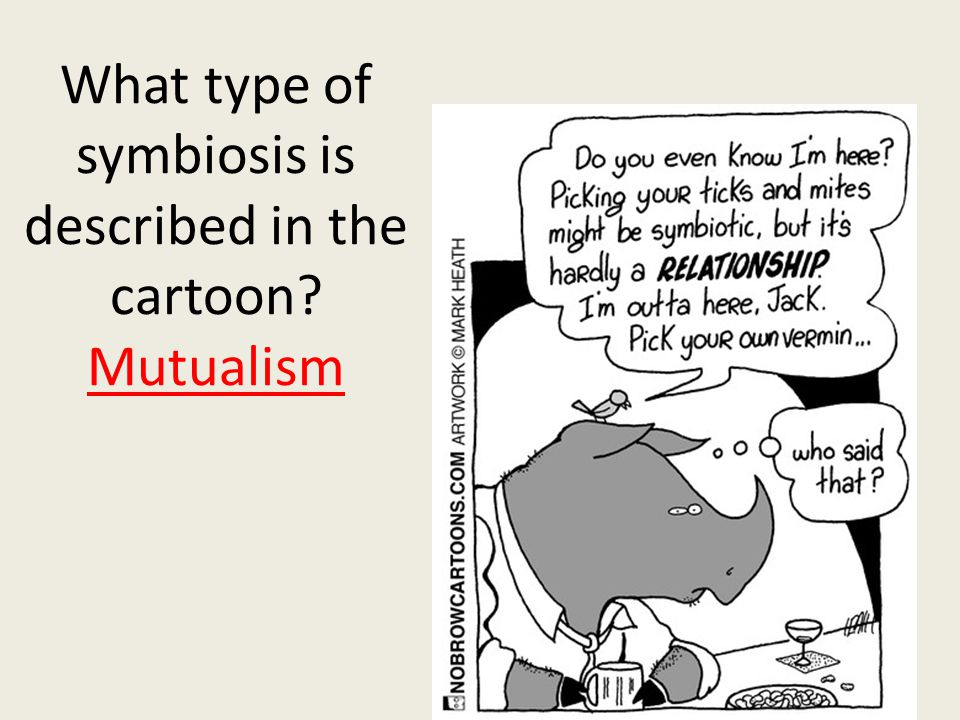 What type of symbiosis is described in the cartoon Mutualism