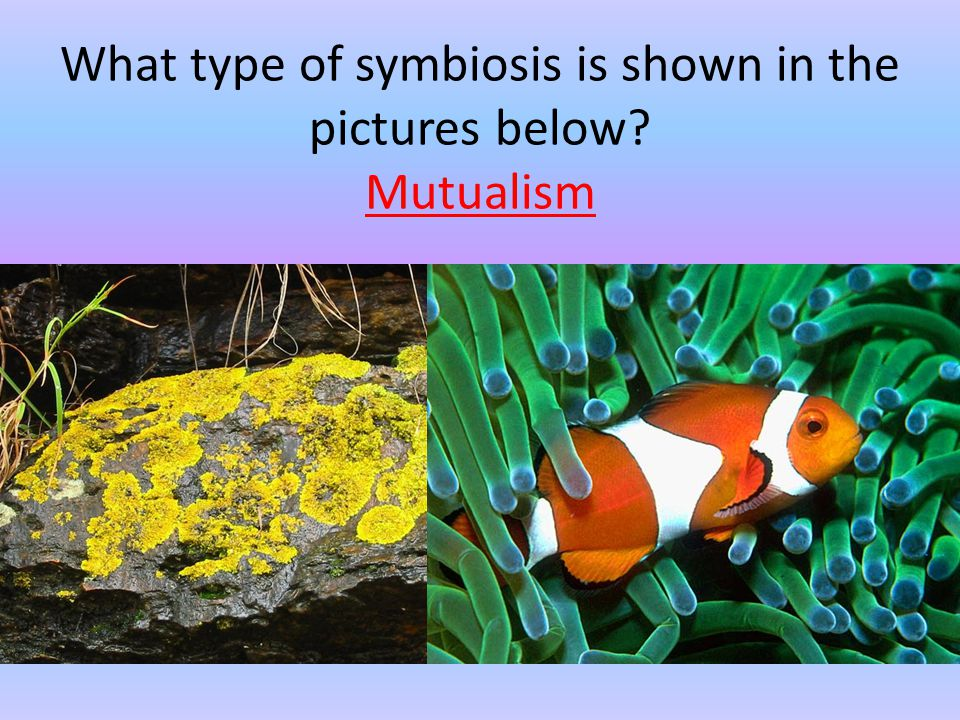 What type of symbiosis is shown in the pictures below Mutualism